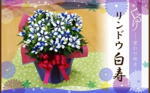 リンドウ|敬老の日に合う花言葉