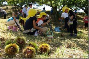 岐阜県で栗拾いをする子供達