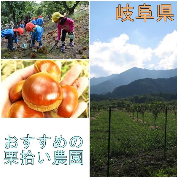岐阜県でおすすめの栗拾いが出来る農園特集