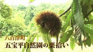 五宝平自然園|岐阜県で栗拾いが出来るおすすめの農園