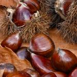 栗の品種と特徴を紹介! 利平やぽろたんなど栗の品種一覧と見分け方を紹介