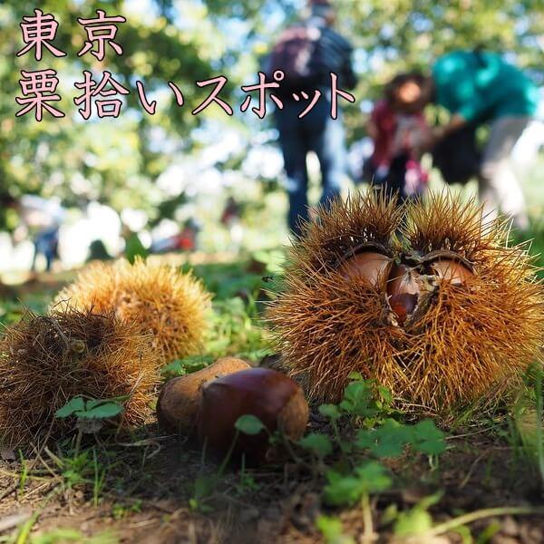 栗拾いは東京都が人気|東京でおすすめの栗拾いスポットを紹介!