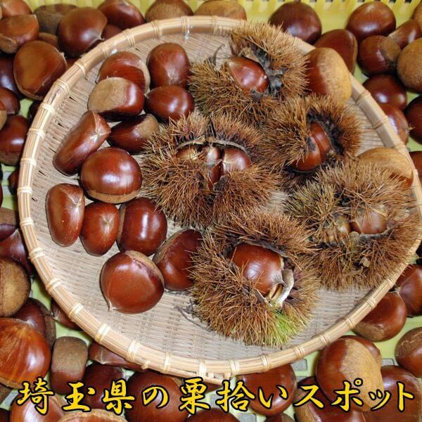 栗拾いは埼玉県が人気|埼玉でおすすめの栗拾いスポットは?