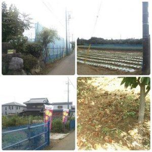 野口農園|千葉県でおすすめの栗拾いスポット