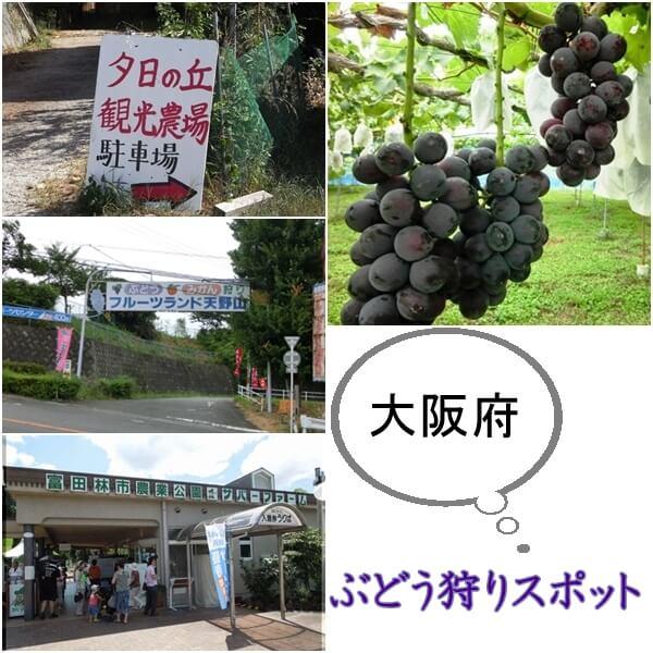 大阪府のぶどう狩りスポット|おすすめの農園は?時期や営業時間は?