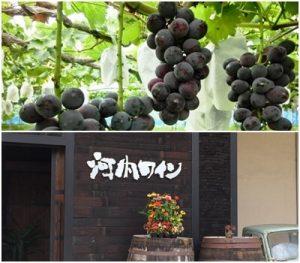 河内ワインと大阪府のぶどう