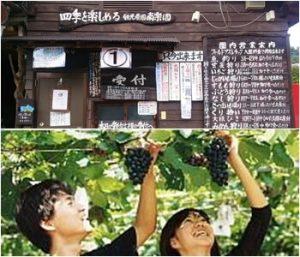 観光農園・南楽園|大阪府のぶどう狩りが出来る農園