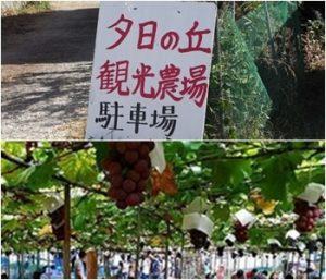 夕日ヶ丘観光農場|大阪府のぶどう狩りが出来る農園