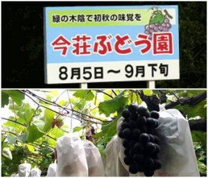 今荘観光ぶどう園|滋賀県の秋の味覚狩りが出来る