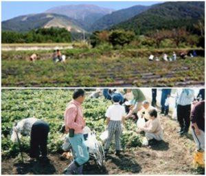弥高観光いも園|滋賀県の秋の味覚狩りが出来る