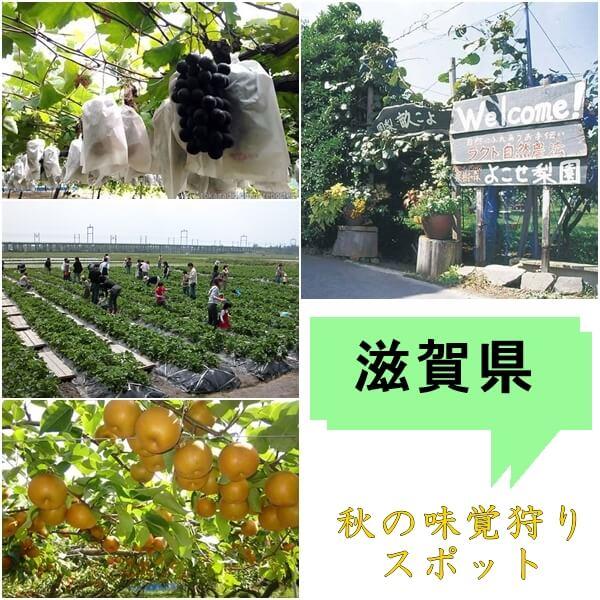 滋賀県の秋の味覚狩りが出来る農園特集