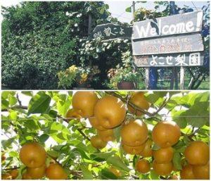 果樹の森・よこせ梨園|滋賀県の秋の味覚狩りが出来る
