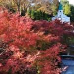 京都の紅葉が楽しめるレストラン! 紅葉が楽しめる料亭や京料理屋を紹介