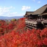 京都の紅葉のお土産を紹介! 京都の紅葉のお土産はこちら