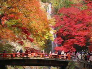 箕面の紅葉風景