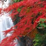 箕面の紅葉が楽しめるランチ!箕面の紅葉はランチをしながら楽しめます