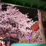 浅草で花見後にピッタリなおしゃれなレストラン(徒歩7分圏内)を紹介!
