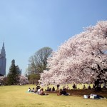 花見にぴったりな新宿のレストランを紹介!新宿御苑の花見が楽しめるレストラン