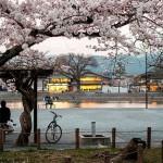 京都 嵐山でお花見ランチやお花見ディナー!嵐山の桜の見頃2017と京料理やイタリアンレストランを紹介