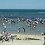 潮干狩り2017は三重県の無料スポットが人気!御殿場海岸など三重の潮干狩り穴場スポット