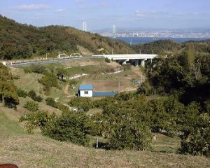 古川農園|兵庫県の栗拾いおすすめスポット
