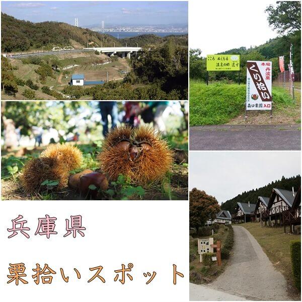 兵庫県の栗拾いおすすめスポット