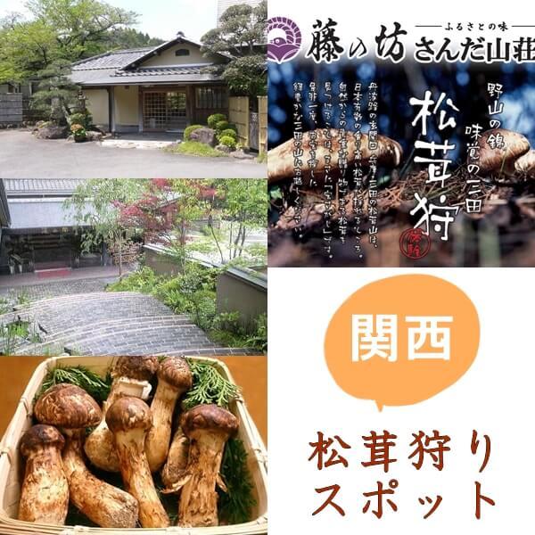 関西の松茸狩りスポット8選|時期・料金・松茸料理は?