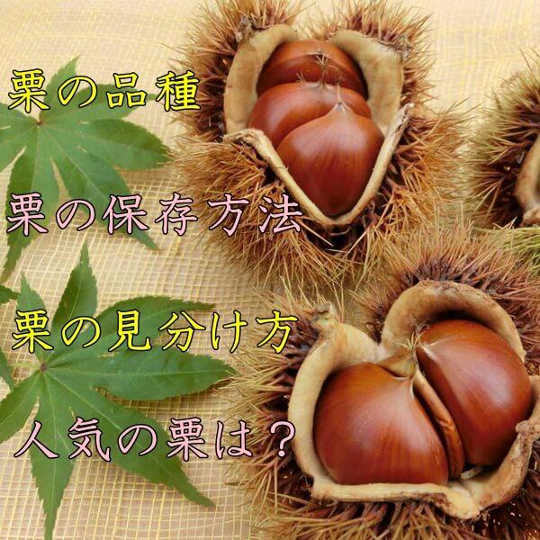 栗の種類や品種| 美味しい栗の見分け方は?栗の保存方法は?
