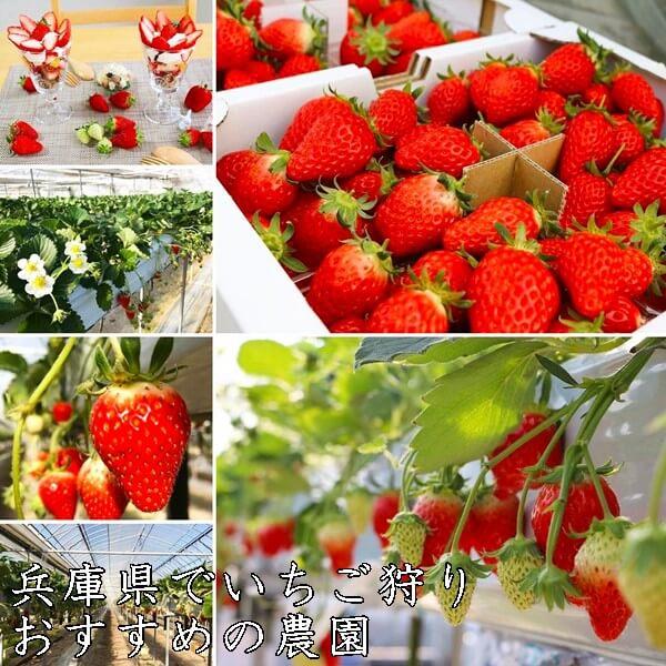 いちご狩り(兵庫県)おすすめ農園9選|食べ放題・予約なし?