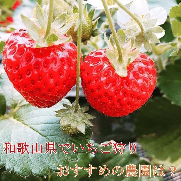 和歌山県のいちご狩りが出来るおすすめの農園特集