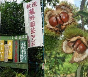 藤野園芸ランド|関東地方の栗拾いが出来るスポット