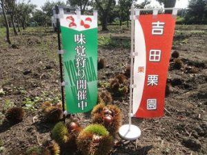 吉田栗園|関東で栗拾いが出来る栗園