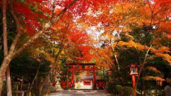 大原野神社 紅葉