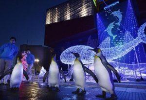 海遊館|大阪のイルミネーション