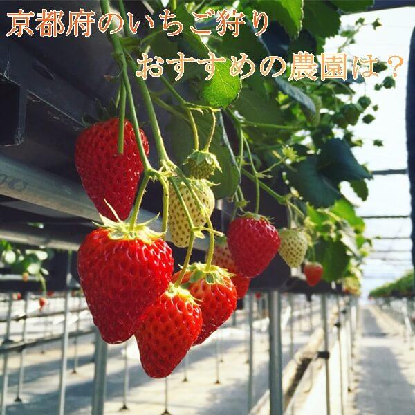 いちご狩り(京都府)スポット7選|おすすめの農園!バーベキューも出来る!