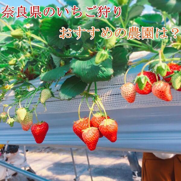 奈良県のいちご狩りが出来るおすすめの農園特集