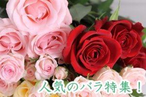 通販で人気のバラ
