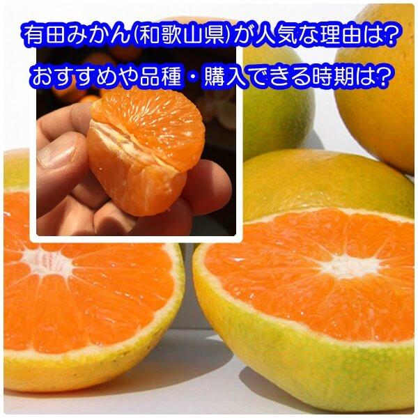 有田みかん(和歌山県)が人気な理由と愛媛みかんとの違いは?おすすめや品種・購入できる時期は?