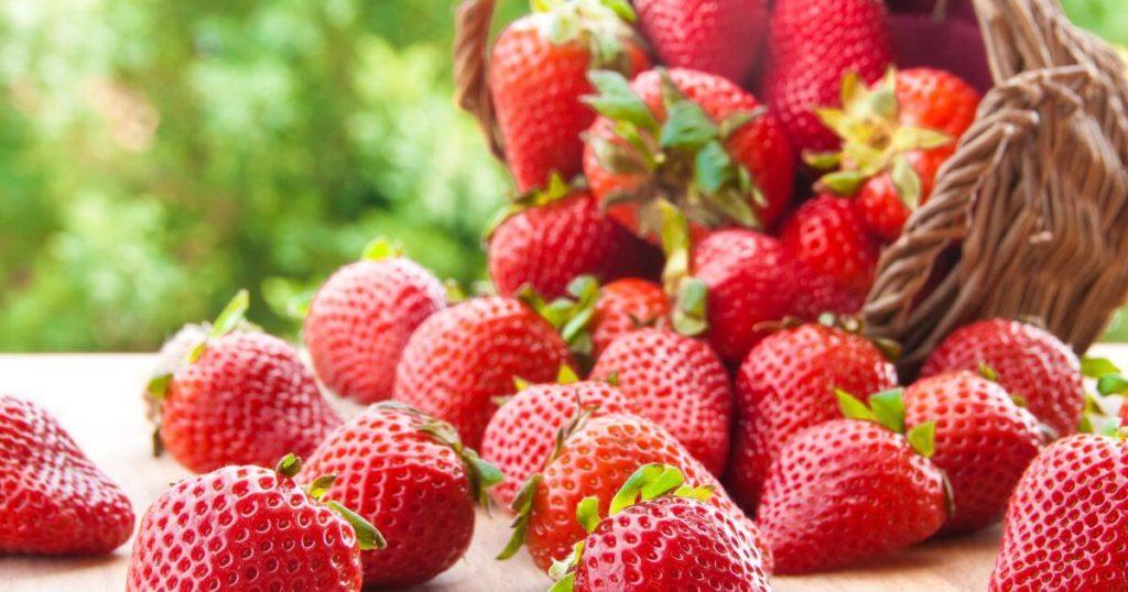 いちご狩り(奈良県)おすすめ農園5選|予約なし?人気のブランド苺が食べれる!