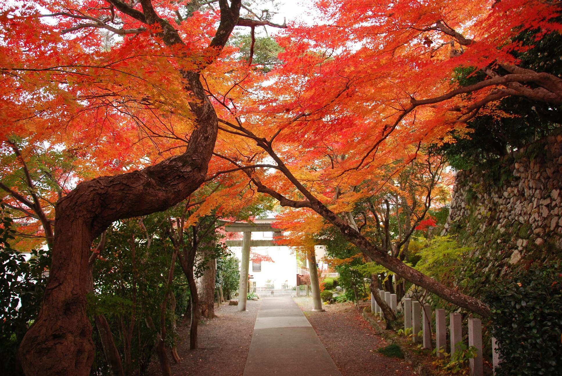 聖天宮 西江寺の紅葉